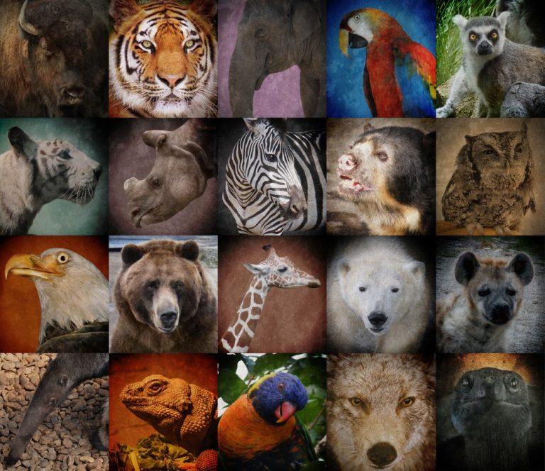 10-endangered-species-around-the-world