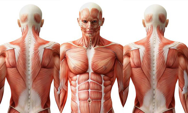 10 surprising facts about human body that we bet you didn't know