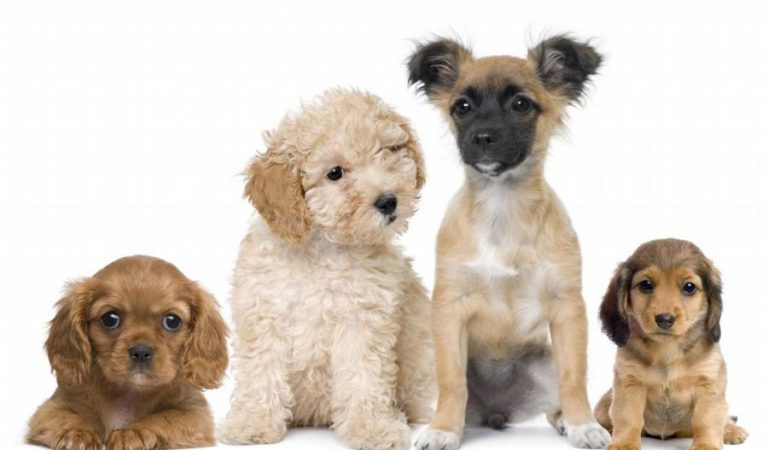 10 breeds of dogs you would love to pet