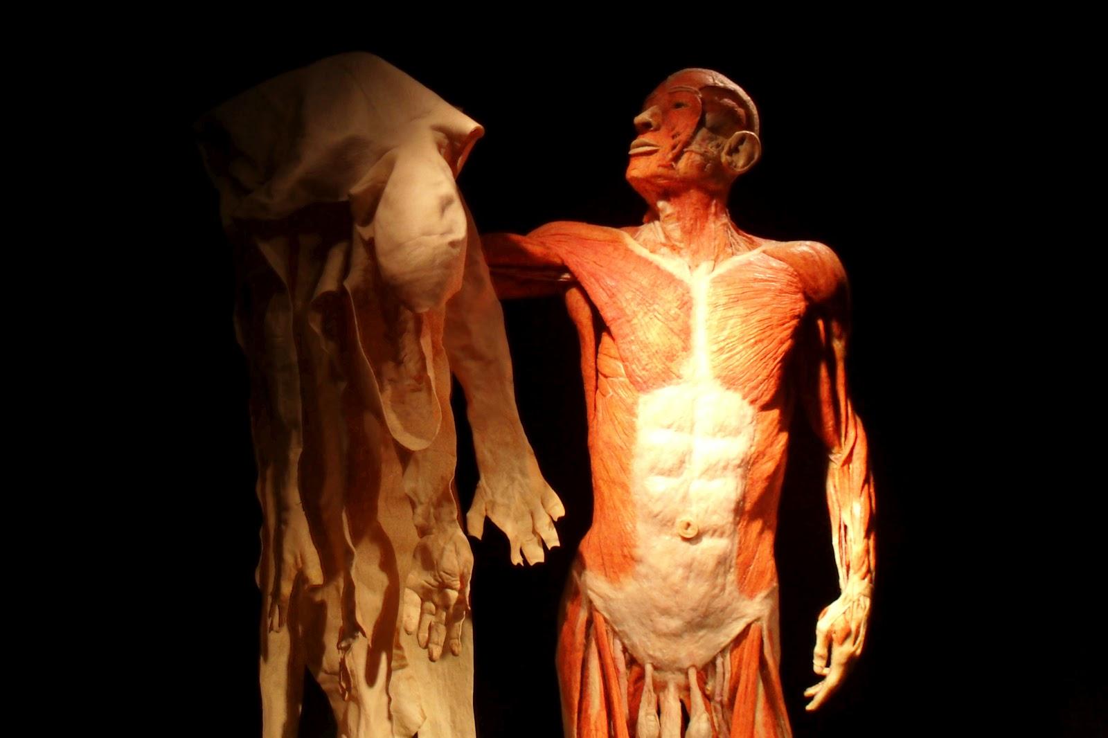 skin-is-an-organ