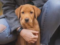 Tips to be a Responsible Pet Owne