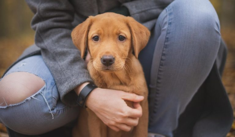 10 Tips to be a Responsible Pet Owner