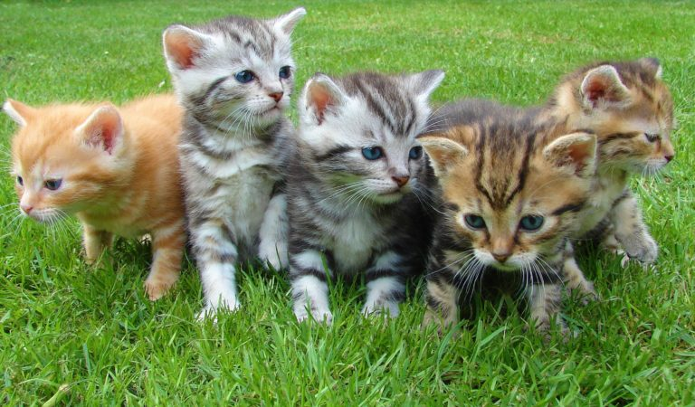 EXPERT GUIDE ON TRAINING YOUR PET KITTENS
