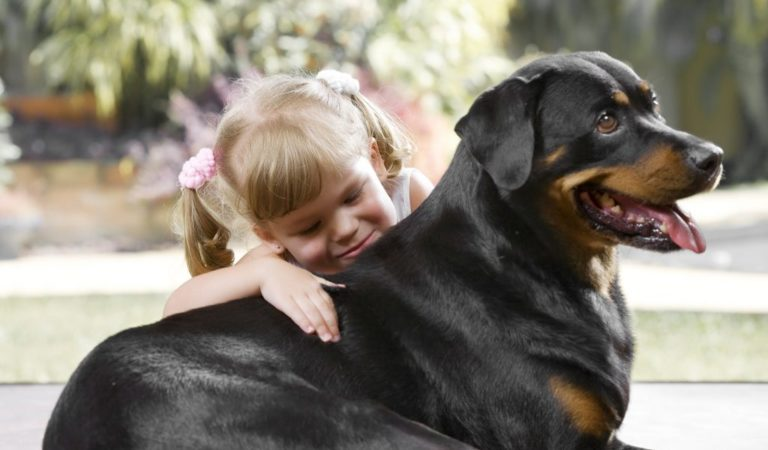 Is a Rottweiler Right For Me?